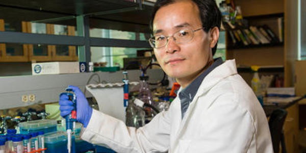 Image of Weiwen Long Ph.D.